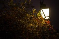 Upplyst lappad gata med ljusa reflexioner på kullersten i gammal historisk stad vid natt Suddigt mörker Royaltyfria Foton