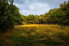Upplyst röjning i skogen Royaltyfria Foton