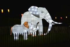 Upplysta elefanter royaltyfria foton