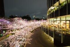 Upplysta körsbärsröda träd längs gatan på den Tokyo midtownen, Minato-Ku, Tokyo, Japan i våren, 2017 Royaltyfri Fotografi