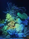 Upplysta korallbildande Arkivbild