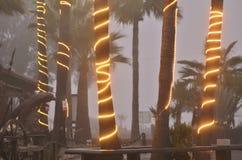 Upplysta rader av ljus slogg in palmträdstammar dimmiga kust- Baja, Mexico Royaltyfria Bilder