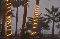 Upplysta rader av ljus slogg in palmträdstammar dimmiga kust- Baja, Mexico Arkivfoto