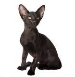 Uppmärksam svart kattunge Royaltyfri Foto
