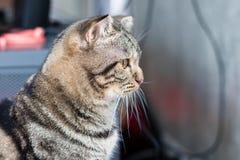 Uppmärksamhet för kattstirrandelön Arkivbilder