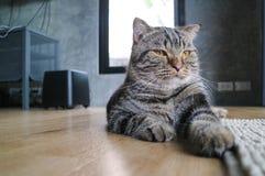 Uppmärksamhet för kattstirrandelön Arkivbild