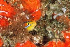 uppnosig fisk Royaltyfria Foton