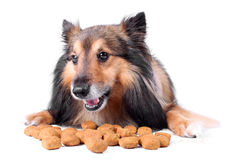 uppnosig hund Arkivfoto