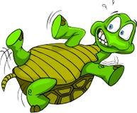 Uppochnervänd sköldpadda Arkivbilder
