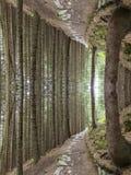 Uppochnervänd skogfiktion Royaltyfri Bild