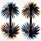 Uppochnervända palmträd Arkivbilder
