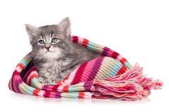 Uppriven kattunge Fotografering för Bildbyråer