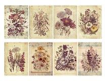 Uppsättning av åtta blom- kort för sjaskig tappning med texturerad lager och text. vektor illustrationer