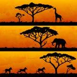 Uppsättning av afrikanska baner Arkivfoton