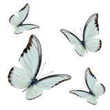 Uppsättning av att flyga härliga buterflies med fullständigt vingen som över sopar fotografering för bildbyråer
