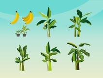 Uppsättning av bananträd Arkivbild