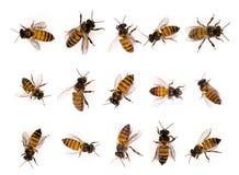 Uppsättning av biet som isoleras på vit arkivfoton