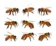Uppsättning av biet som isoleras på vit bakgrund fotografering för bildbyråer