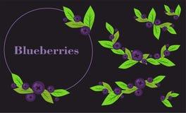 Uppsättning av blåbär på en svart bakgrund Arkivbild
