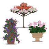 Uppsättning av blom- arrangememt Royaltyfri Illustrationer