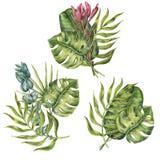 Uppsättning av blom- sammansättningar av tropiska palmblad Fotografering för Bildbyråer