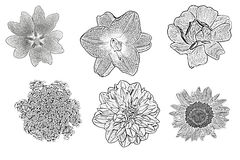 Uppsättning av blom- tryck Arkivfoto