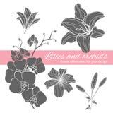Uppsättning av blommakonturer Fotografering för Bildbyråer