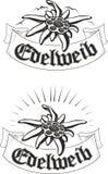 Uppsättning av blomman för edelweiss (leontopodium), symbolet av alpinism Royaltyfria Bilder