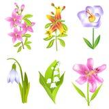 Uppsättning av blommor Arkivbild