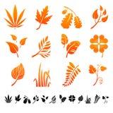 Uppsättning av 12 botaniska symboler Arkivbilder