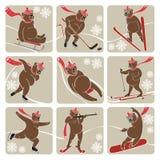 Uppsättning av brunbjörnen i vintersport. Humoristisk illustration Vektor Illustrationer