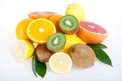 Uppsättning av citrusfrukter Fotografering för Bildbyråer