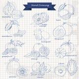 Uppsättning av citrusfrukter på papper Vektorhandteckningen skissar illustrationen Royaltyfri Foto
