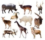 Uppsättning av däggdjurs- djur över vit Arkivfoto