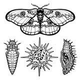 Uppsättning av dekorativa beståndsdelar: fjäril docka, larv, radiolaria stock illustrationer