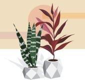 Uppsättning av dekorativa växter i krukor av olika format och färger royaltyfri illustrationer