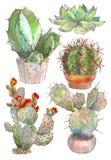 Uppsättning av den botaniska illustrationkaktuns för vattenfärg, isolerat objekt, vändkretsar Arkivbilder
