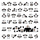 Uppsättning av den djura pingvindesignlägenheten Pingvinfågeln, pingvinvektorn, djur övervintrar, den isolerade pingvinet, djur p stock illustrationer