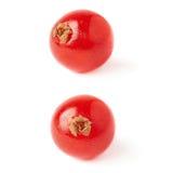 Uppsättning av den enkla röda vinbäret över vit bakgrund Royaltyfria Bilder
