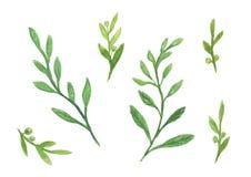 Uppsättning av den gröna illustrationen för bladvattenfärgmålarfärg Royaltyfri Foto