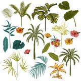 Uppsättning av den härliga handen som drar konstnärligt tropiskt och betesmarken royaltyfri illustrationer