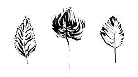 Uppsättning av den hand drog växten Skissa stilvektorillustrationen Blomma och lämnar Arkivbild