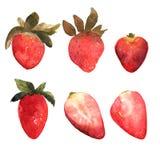 Uppsättning av den isolerade hand drog röda jordgubben Bär och strawber Royaltyfri Foto