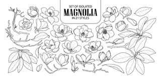 Uppsättning av den isolerade magnolian i 21 stilar Gullig hand dragen blommavektorillustration i svart vit nivå för översikt och royaltyfria bilder