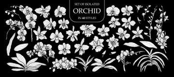 Uppsättning av den isolerade vita konturorkidén i 40 stilar Gullig hand dragen blommavektorillustration i den vita nivån och inge Royaltyfri Fotografi