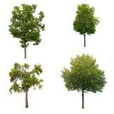 Uppsättning av den lövrika gröna treen Arkivfoton