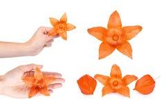 uppsättning av den olika exotiska nya orange physalisen göra en gest handmanicurekvinna bakgrund isolerad white Royaltyfria Bilder