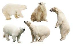Uppsättning av den polara björnen. Isolerat över vit royaltyfri foto