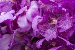 Uppsättning av den purpurfärgade orkidén Arkivbilder