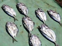 Uppsättning av den torkade fisken Royaltyfria Foton